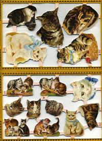 Poesiebilder Katze