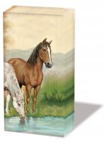 Taschentücher Horses