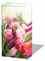 Taschentücher - Herrliche Tulpen