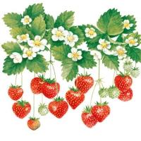 Servietten 25x25 cm - Sommerfrüchte