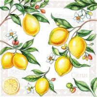 Servietten 25x25 cm - Citrus