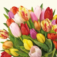 Servietten 33x33 cm - Colourful Tulips