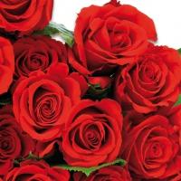 Servietten 33x33 cm - Red Roses