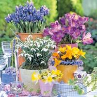Lunch Servietten Spring Bloomers