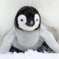 Lunch Servietten Baby Penguin