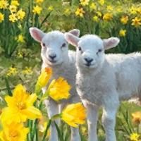 Lunch Servietten Sweet Lambs