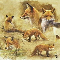 Lunch Servietten Portraits Of Foxes