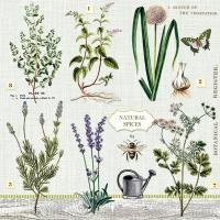 Servietten 33x33 cm - Herbs Garden