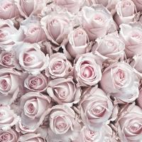 Servietten 33x33 cm - Pastel Roses