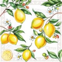Lunch Servietten Citrus