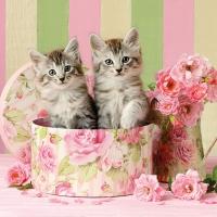 Servietten 33x33 cm - Cats in Box