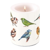 Kerze Candle Big Collection Of Birds