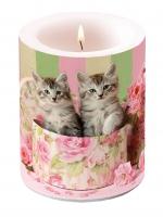 Dekorkerze - Katzen in der Box