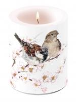 Dekorkerze - Sparrows Blossom