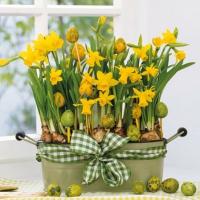 Servietten 25x25 cm - Daffodils