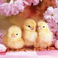 Lunch Servietten Spring Chickens