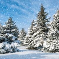 Lunch Servietten Trees in Snow