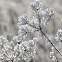 Servietten 33x33 cm - Ice Flower