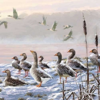Servietten 33x33 cm - Winter River Geese