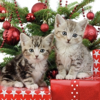 Servietten 33x33 cm - Christmas Kitten