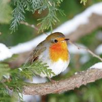 Servietten 33x33 cm - Robin In Tree