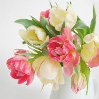 Servietten 25x25 cm - Tulip Romance