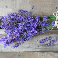 Servietten 33x33 cm - Natural Lavender