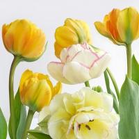 Servietten 33x33 cm - Soft Tulips