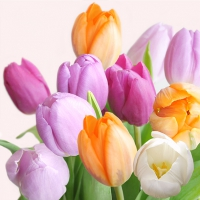 Servietten 33x33 cm - Fresh Tulips