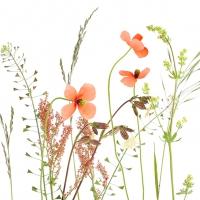 Servietten 33x33 cm - Wiesenblumen