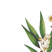 Servietten 24x24 cm - Eucalyptus