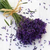 Servietten 33x33 cm - Lavendel