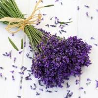 Lunch Servietten Lavender