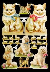Glanzbilder - Hunde und Katzen