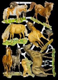 Glanzbilder - Wildpferde
