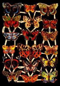 Glanzbilder - Schmetterlinge mit Motte