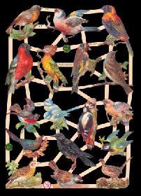 Glanzbilder - heimische Vögel