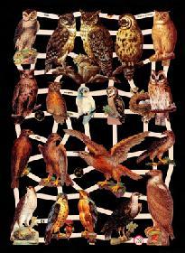 Glanzbilder Greifvögel + Uhu