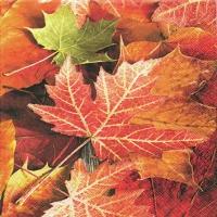 Servietten 25x25 cm - Maple Leaves