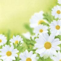 Servietten 25x25 cm - Weiße Gänseblümchen
