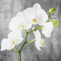 Servietten 25x25 cm - Weiße Orchidee