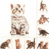 Servietten 33x33 cm - Meow