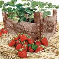 Lunch Servietten Strawberry Case