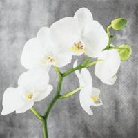 Servietten 33x33 cm - Weiße Orchidee