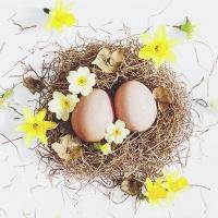 Servietten 33x33 cm - Easter Basket
