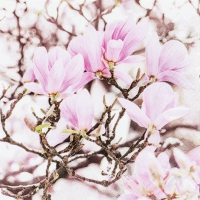 Servietten 33x33 cm - Pink Magnolia