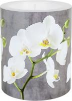 Dekorkerze - White Orchid