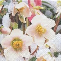 Servietten 33x33 cm - Snow Roses