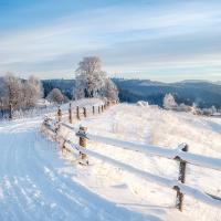 Servietten 33x33 cm - Winter Walk