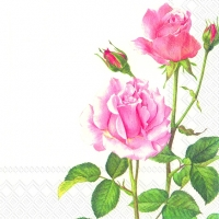 Servietten 25x25 cm - A ROSE FOR YOU